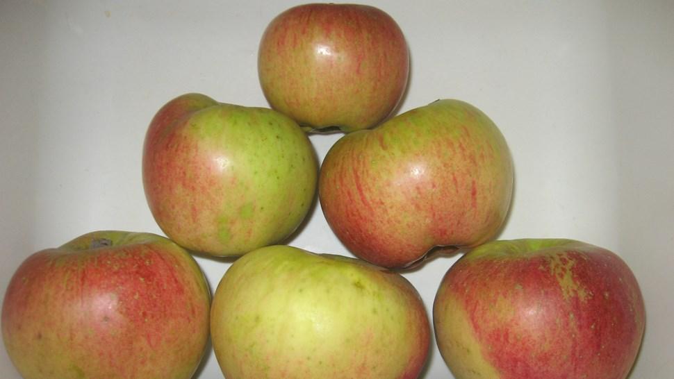 Applebalanced