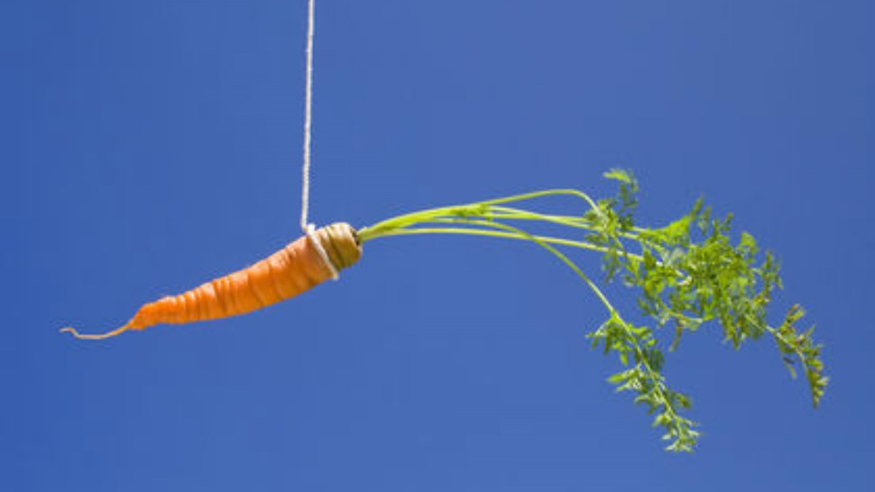 carrot dangled