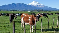 New Zealand's Spark bets the farm on an IoT push