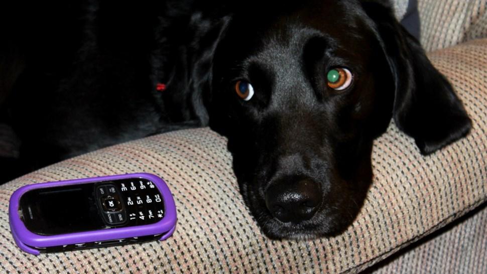 dogphone