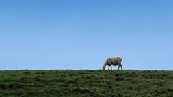 Ewe'll be surprised by this M2M app. It's the new Fjord Escort - for Norwegian sheep!