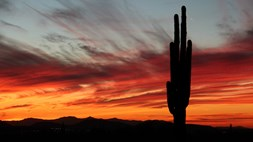 Phoenix sees Phase 2 of NFV begin - as ZTE signs up to the OPNFV Initiative