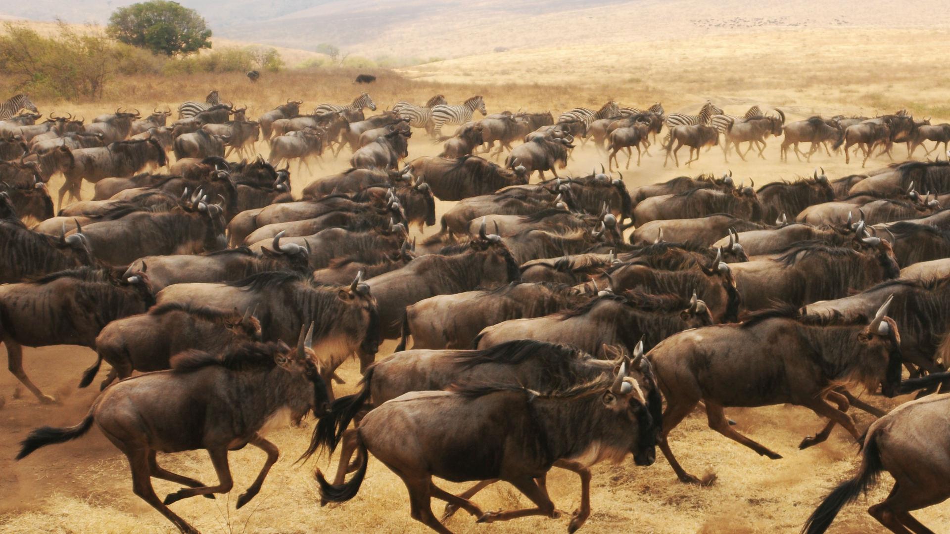 скачать игру stampede