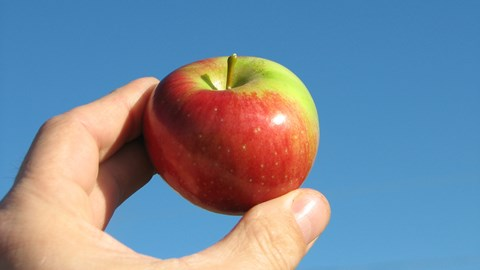 The Apple iPhone picking season nears: time for an up-sizing?