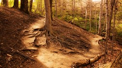 Two business model paths to the IoT