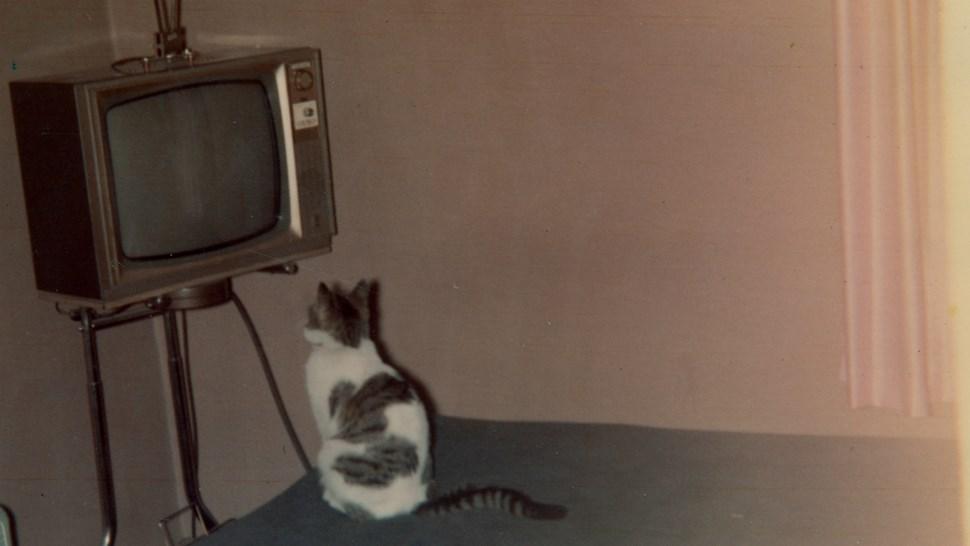 weird tv cat